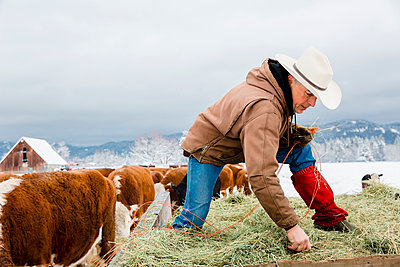 Caucasian farmer hauling hay in snowy field - p555m1312065 by Inti St Clair