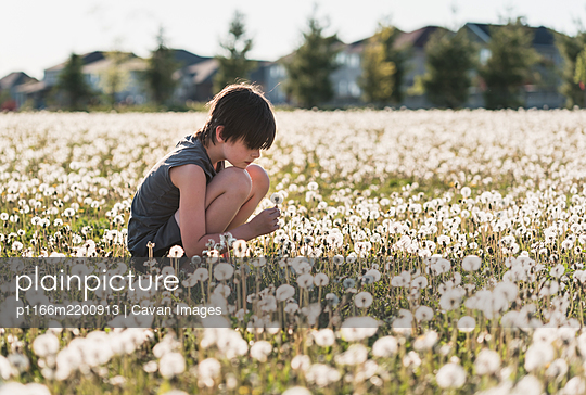 Boy sitting in a grassy field full of dandelions on summer day. - p1166m2200913 by Cavan Images