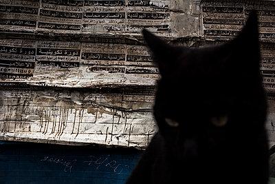 Schwarze Katze - p1007m2092413 von Tilby Vattard