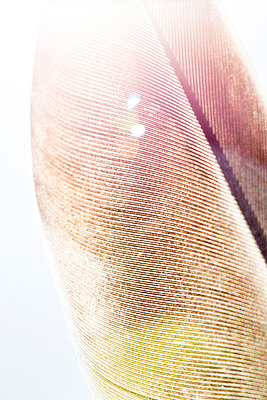 Close up detail of the textured surface of a birds feather. - p1057m1572612 by Stephen Shepherd