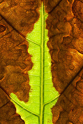 Detail of a leaf - p4150168 by Tanja Luther