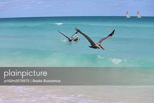 Pelikane am Strand auf Kuba - p162m2076972 von Beate Bussenius