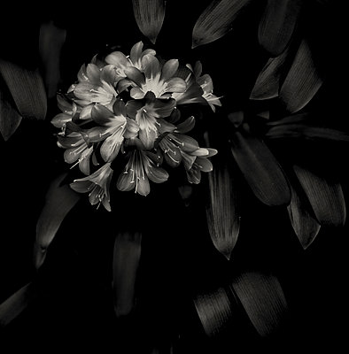 Flowers - p1088m1050157 by Martin Benner