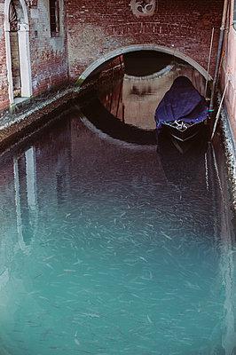 Fische im Kanal - p1326m1218705 von kemai