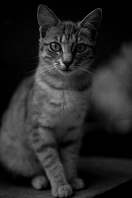 Katzenportrait - p772m1152826 von bellabellinsky