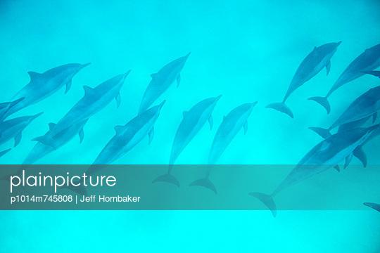 p1014m745808 von Jeff Hornbaker