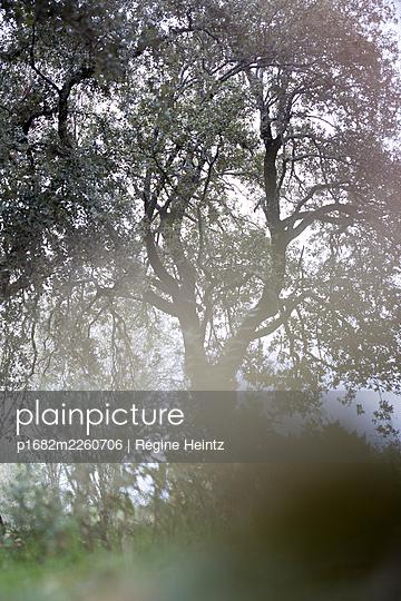 Verwunschener Baum - p1682m2260706 von Régine Heintz