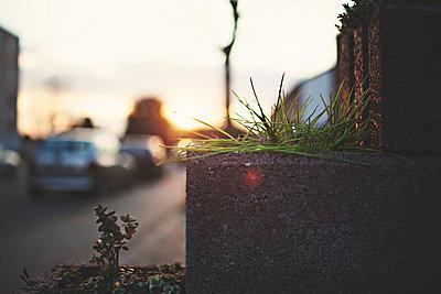 Bepflanzt - p1002m740722 von christian plochacki