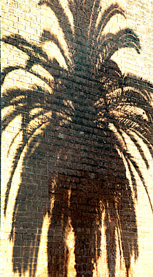 Shadow of a palm tree on the wall - p382m1119742 by Anna Matzen