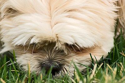 Dog, close-up - p4340390f by Paulina Michaud