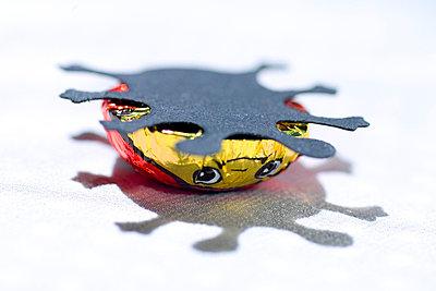 Schokokäfer hilflos - p5700024 von Elke Röbken