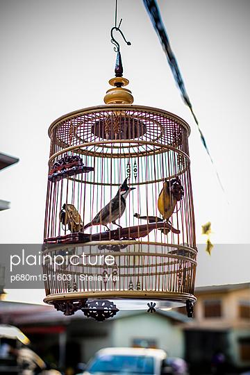 plainpicture - plainpicture p680m1511603 - Exotic birds - plainpicture/Stella Mai