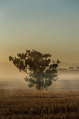 Single tree in the savannah - p1640m2261147 by Holly & John