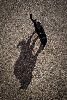 Black cat  - p1687m2284261 by Katja Kircher