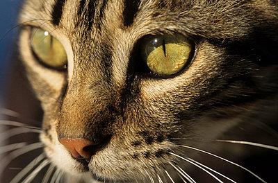 Katze - p3300474 von Harald Braun