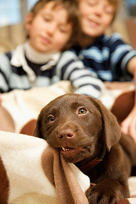 Boys and chocolate lab - p6690306 by Jutta Klee photography
