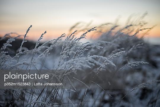 p352m1523843 von Lotta Johansson