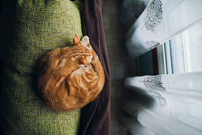 Cat sleeping on backrest of a couch - p300m1228037 by Ramon Espelt