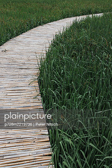 Thailand, Bamboo path over rice field - p728m2219736 by Peter Nitsch
