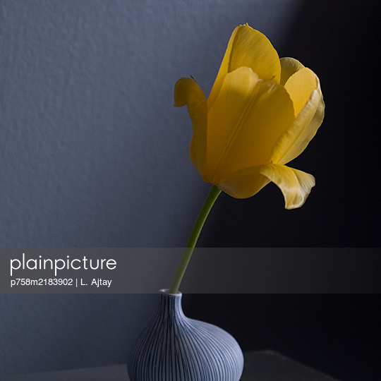 Yellow tulip in a vase - p758m2183902 by L. Ajtay
