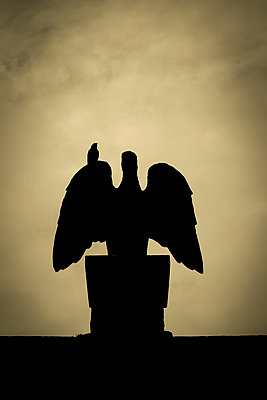 Silhouette of a bird sitting on a bird statue - p1228m1474949 by Benjamin Harte