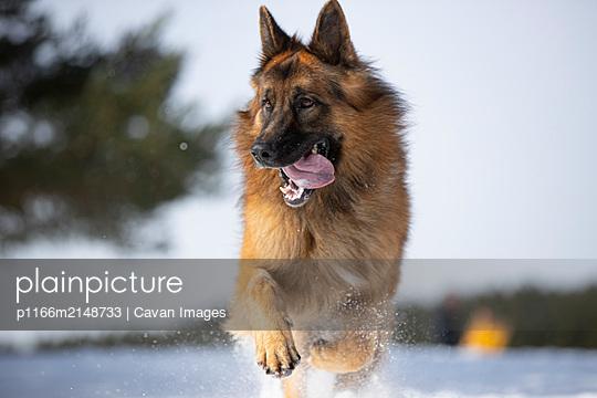 p1166m2148733 von Cavan Images