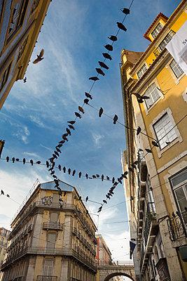 Alte Häuser und Tauben  in Lissabon - p1032m1113152 von Fuercho