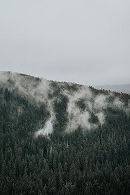 Wafts of mist floating over woodland - p1184m1424435 by brabanski