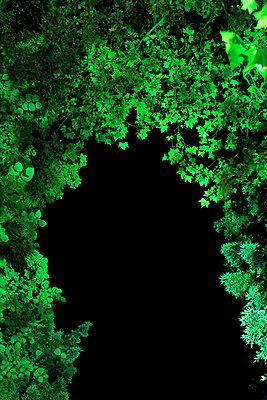 Angestrahlte Baumkronen II - p606m822717 von Iris Friedrich