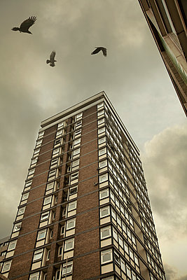 Vögel über Wohnblock - p1248m1185559 von miguel sobreira