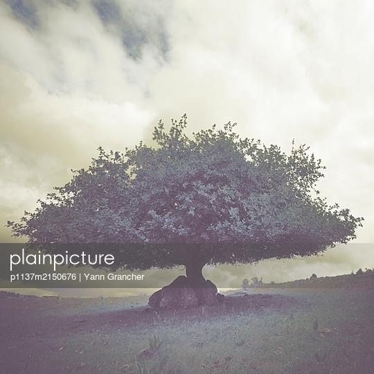 Tree in Aubrac - p1137m2150676 by Yann Grancher