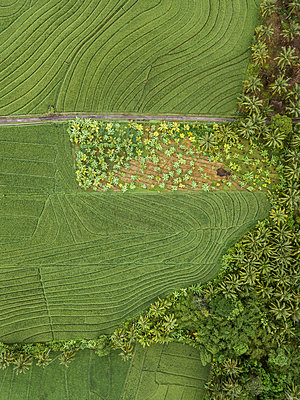 Fields and trees, aerial view - p1108m2141988 by trubavin