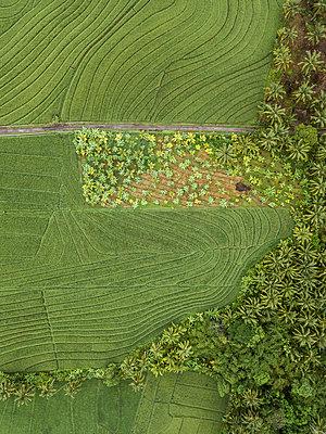 Felder und Bäume, Luftaufnahme - p1108m2141988 von trubavin