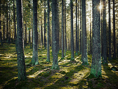 Forest - p312m1164719 by Stefan Isaksson