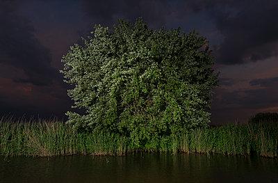 tree at night - p1132m1591242 by Mischa Keijser