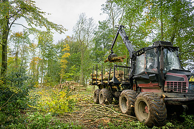 Log carrying machine stacking logs in sustainable forest - p924m2271165 by Monty Rakusen