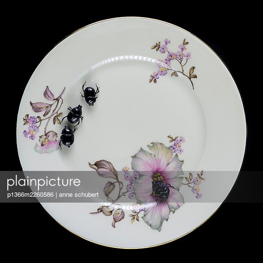 Several beetles on plate with floral pattern - p1366m2260586 by anne schubert