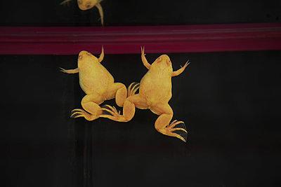 Gelber Axolotl - p375m1563886 von whatapicture