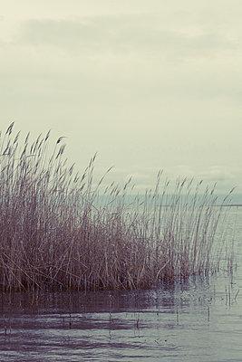 Reeds on the Aydar Lake, Uzbekistan - p1189m2176154 by Adnan Arnaout