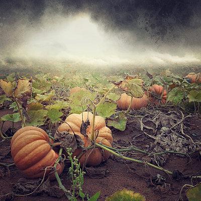 News from Planet Pumpkin - p1633m2220243 by Bernd Webler