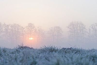 Sunrise in winter - p570m2076979 by Elke Röbken