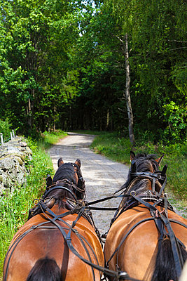 Two Horses In Pairs Pulling Cart On Dirt Track - p847m888973 by Bildhuset