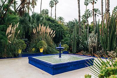 Jardin Majorelle - p1507m2043471 by Emma Grann