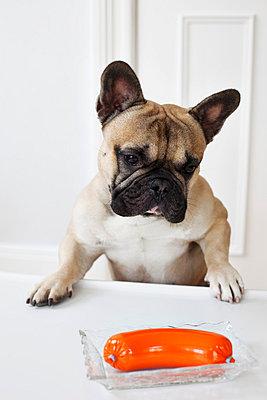 Lauernder Hund - p4320492 von mia takahara