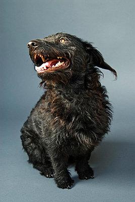 Dog - p9540034 by Heidi Mayer