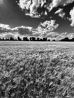 Corn field and moving clouds - p958m2288759 by KL23