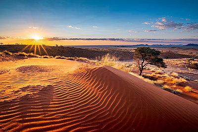Namib-Naukluft National Park, Namibia, Africa. Ripples of sand on a petrified dune at sunset. - p651m2033372 by Marco Bottigelli