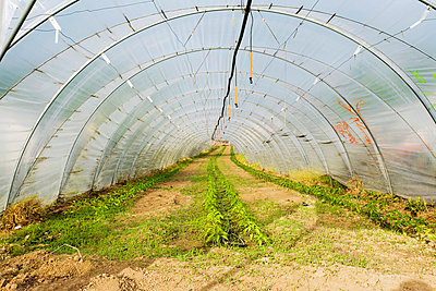 Germany, greenhouse in Baden-Wuerttemberg - p3003671f by Mel Stuart