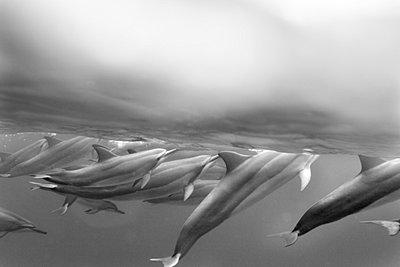 Dolphin - p3432722 by Sean Davey