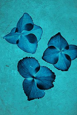 Petals - p450m1172655 by Hanka Steidle